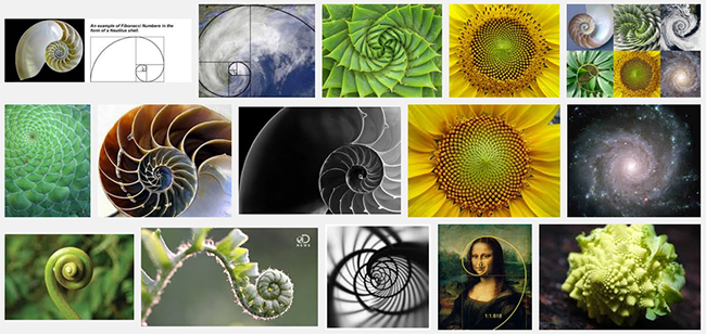 Lots of examples of the golden ratio in nature.